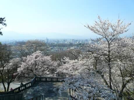 雲上殿の桜3.jpg