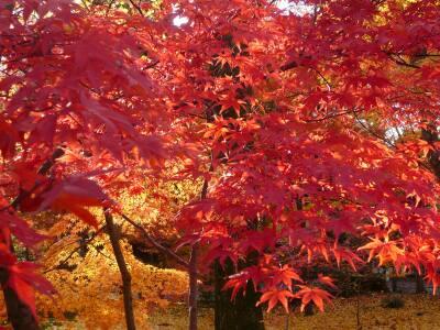永観堂紅葉200803