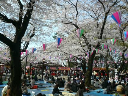 喜多院の桜2.jpg