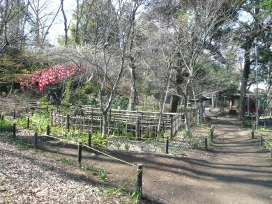 興禅院放生池付近