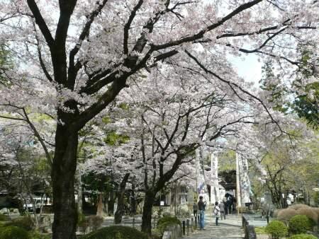恵林寺 桜2.jpg