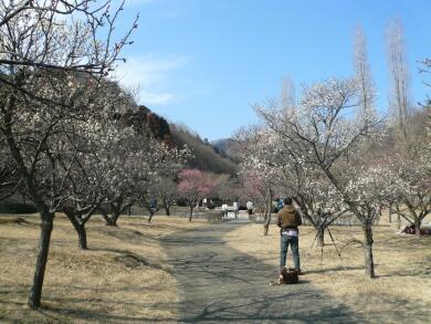 佐野梅林公園