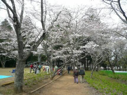 宗吾霊堂の桜3.jpg