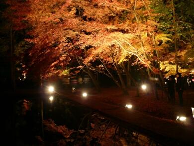 曽木公園紅葉 ライトアップ