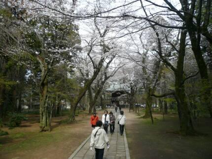 東漸寺の桜6.jpg