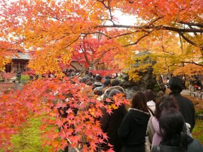宝厳院の紅葉 混雑