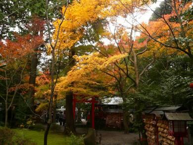 野宮神社 紅葉