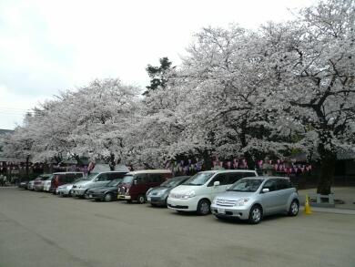 蓮馨寺の桜_駐車場