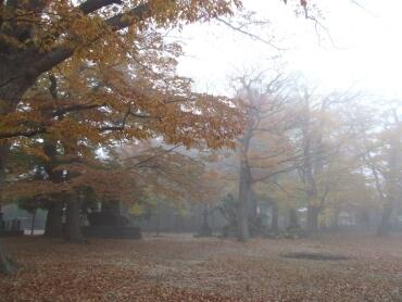 国分寺の紅葉