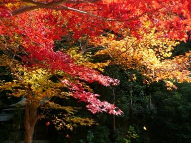 日向大神宮 紅葉