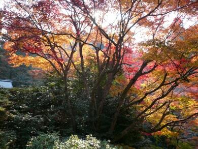 日向大神宮紅葉