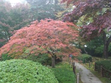 もみじ公園の紅葉