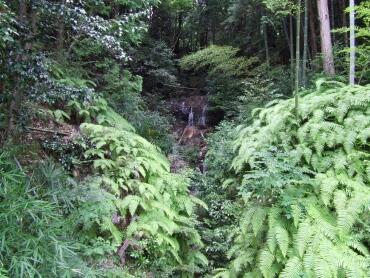 妙感寺 不老の滝