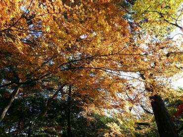静嘉堂緑地の紅葉