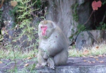 イタリア大使館で見かけた猿.jpg