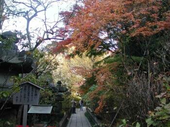 安国論寺鎌倉紅葉2.jpg