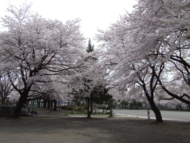 王公園2.jpg
