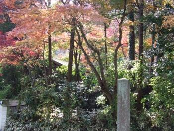 海蔵寺紅葉1.jpg
