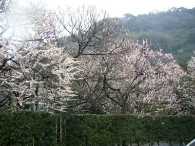 丸子梅園2.jpg