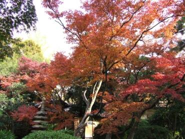 諸戸氏庭園紅葉4.jpg