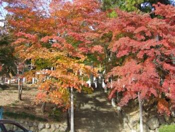 小鹿神社紅葉4