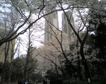新宿中央公園の桜2.jpg