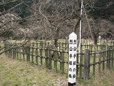 諏訪梅園烈公手植えの梅 日立市梅の名所