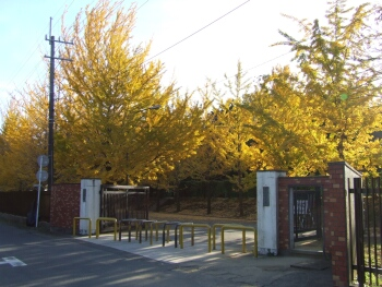 東洋大学川越キャンバスの紅葉3.jpg