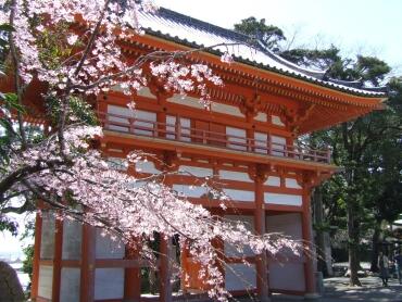 道成寺三重塔山門と桜.jpg