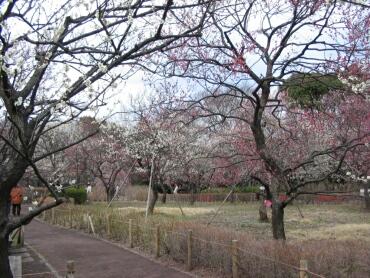 府中郷土の森梅園3.jpg
