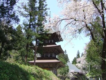 法用寺三重塔と桜.jpg