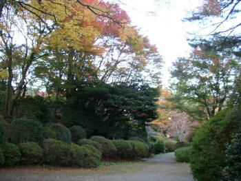 蓬莱園(小涌谷)紅葉2.jpg