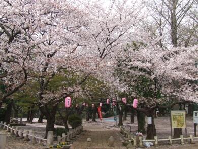 与野公園の桜3.jpg
