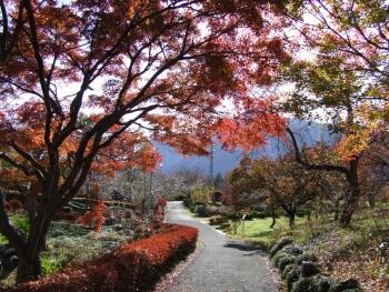 羊山公園紅葉2.jpg