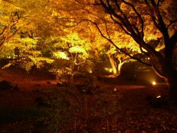 六義園紅葉2.jpg