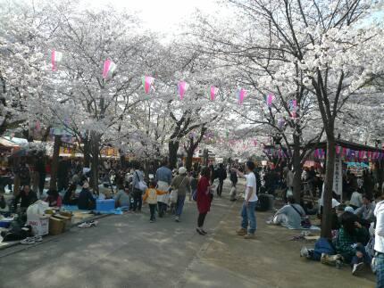 喜多院の桜1.jpg