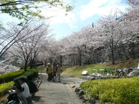 甲府城の桜1.jpg