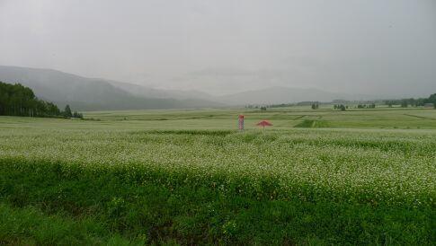 そばの花展望台2.jpg