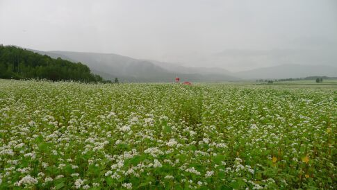 そばの花展望台3.jpg
