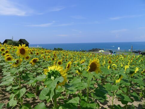 みさき台公園6.jpg