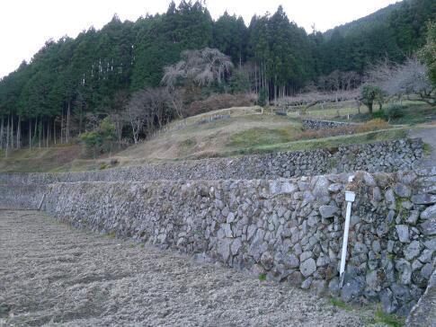 上稲子の棚田2.jpg