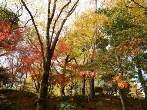 上野公園の紅葉2.jpg