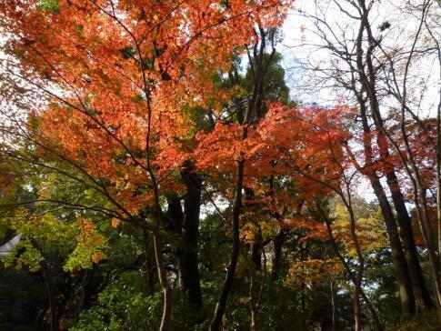 上野公園の紅葉4.jpg