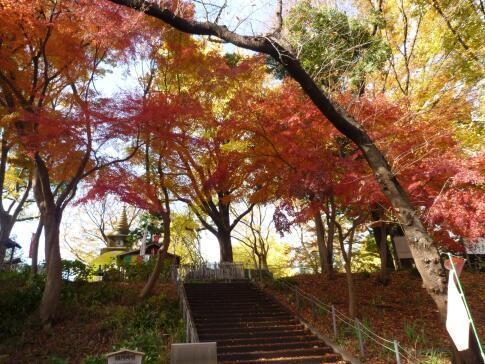 上野公園の紅葉5.jpg