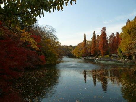 井の頭公園の紅葉.jpg