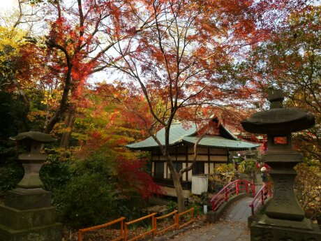 井の頭公園の紅葉2.jpg