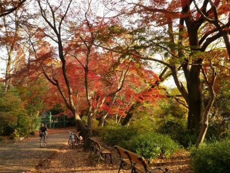 井の頭公園の紅葉3.jpg
