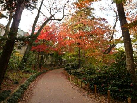 井の頭公園の紅葉4.jpg