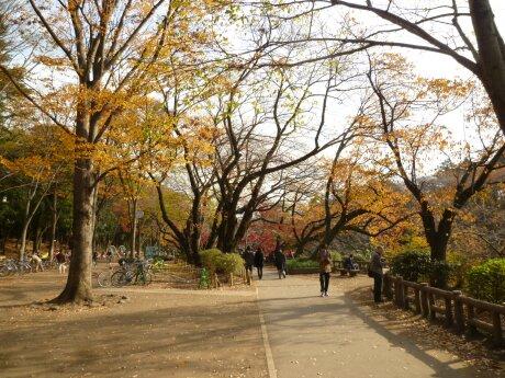 井の頭公園の紅葉5.jpg