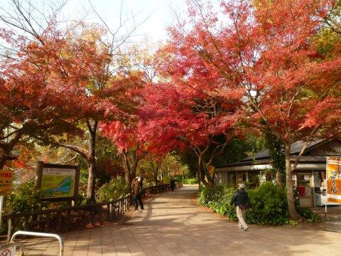 井の頭公園の紅葉7.jpg